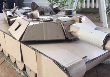 【まとめ】猫戦車(段ボール)がTwitterで話題。作り方についても
