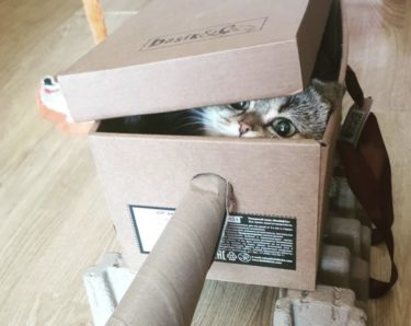 【#cattank】海外の猫用の戦車インスタまとめ!ダンボールで猫戦車を作るの流行中。